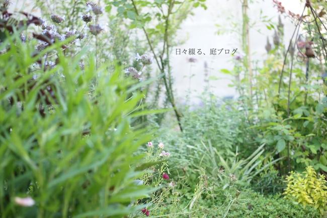 f:id:m-garden-life:20180615160409j:plain