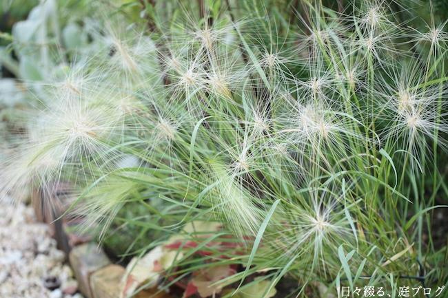f:id:m-garden-life:20180615160437j:plain