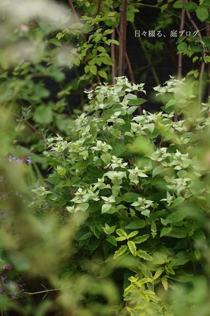 f:id:m-garden-life:20180615160935j:plain