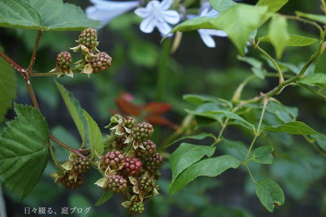 f:id:m-garden-life:20180615161011j:plain