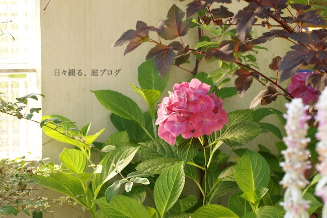 f:id:m-garden-life:20180617074928j:plain