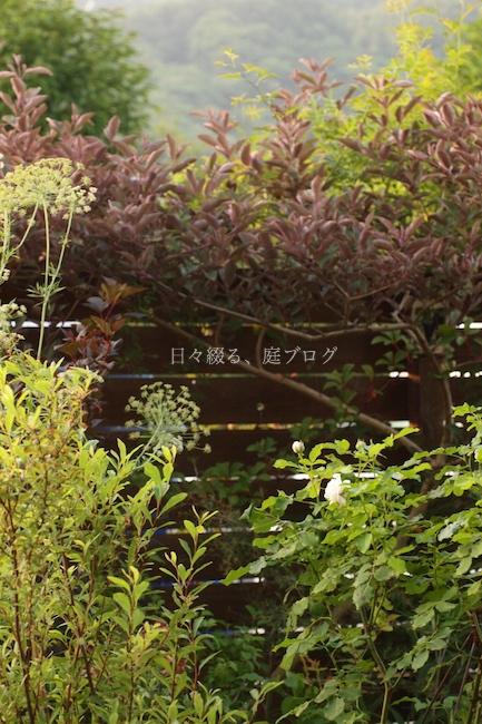 f:id:m-garden-life:20180617082329j:plain