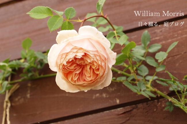f:id:m-garden-life:20180630190816j:plain