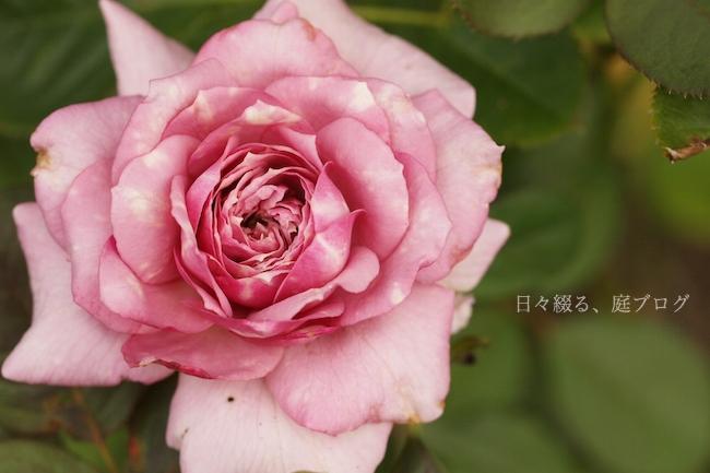 f:id:m-garden-life:20180718194723j:plain