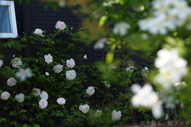 f:id:m-garden-life:20180810143127j:plain