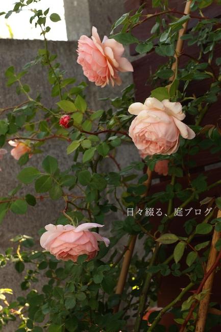 f:id:m-garden-life:20180810143222j:plain