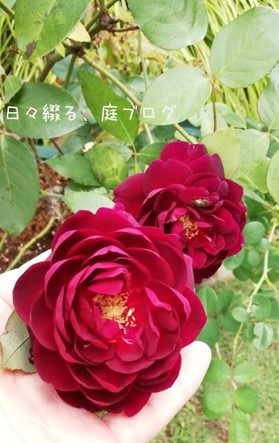 f:id:m-garden-life:20181002182544j:image