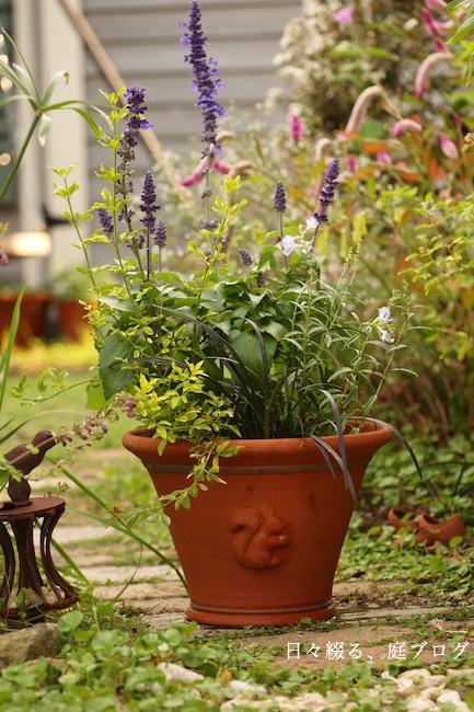 f:id:m-garden-life:20181003193929j:plain