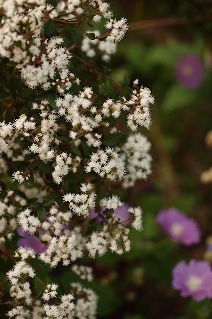 f:id:m-garden-life:20181008145445j:plain