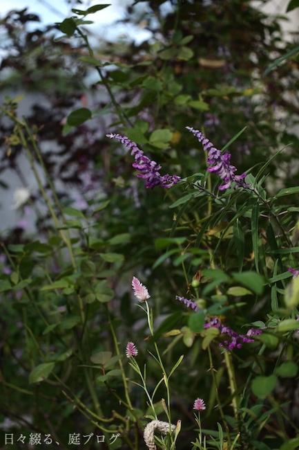 f:id:m-garden-life:20181008145606j:plain