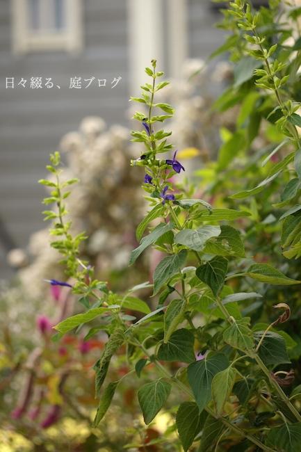 f:id:m-garden-life:20181008145731j:plain