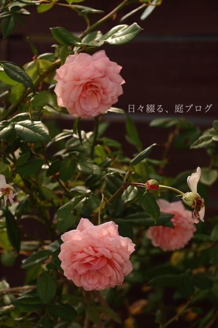 f:id:m-garden-life:20181008145846j:plain