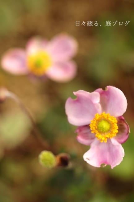 f:id:m-garden-life:20181008150431j:plain