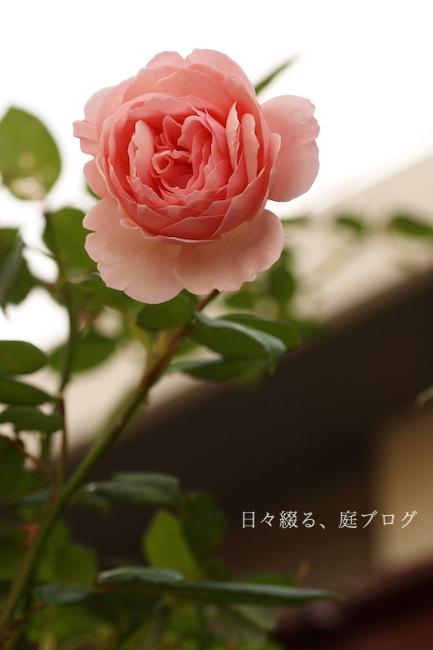 f:id:m-garden-life:20181012180629j:plain