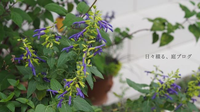 f:id:m-garden-life:20181019160102j:plain