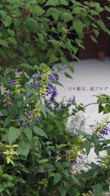 f:id:m-garden-life:20181019160413j:plain