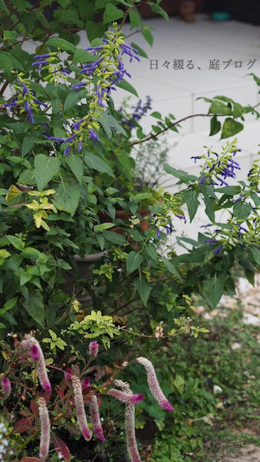 f:id:m-garden-life:20181019160435j:plain