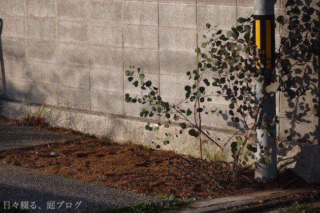 f:id:m-garden-life:20181201161816j:plain