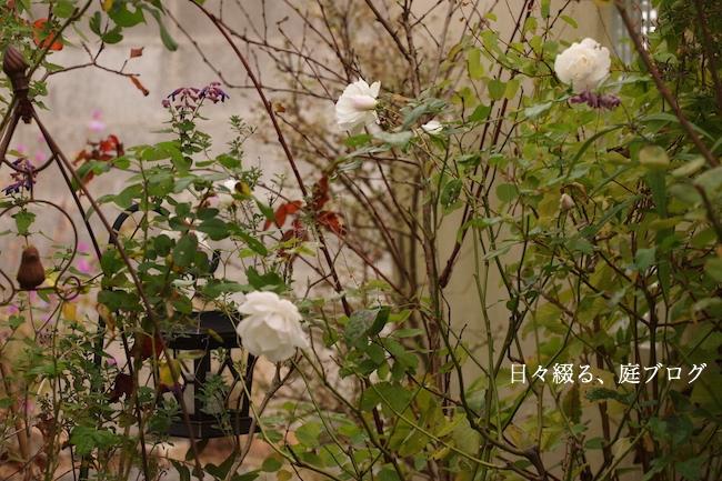 f:id:m-garden-life:20181201163210j:plain
