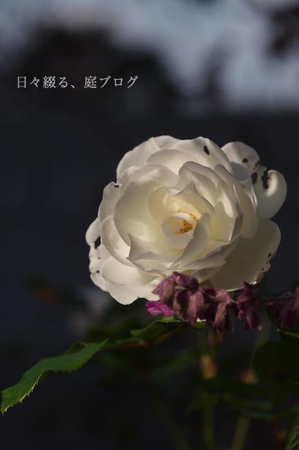 f:id:m-garden-life:20181201163742j:plain
