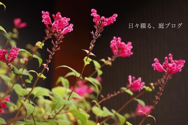 f:id:m-garden-life:20181201163902j:plain