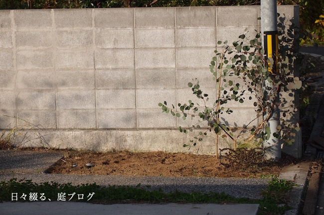 f:id:m-garden-life:20181201165746j:plain