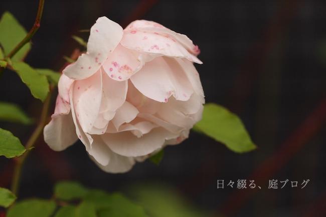 f:id:m-garden-life:20181208143528j:plain