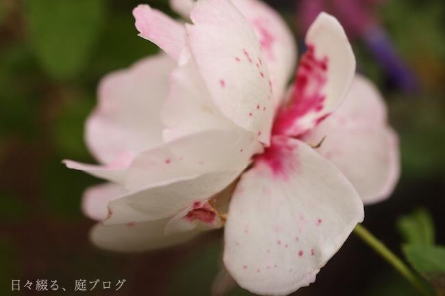 f:id:m-garden-life:20181208144432j:plain