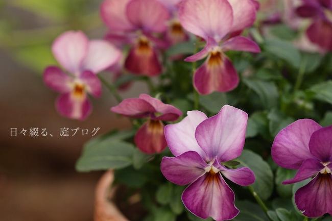 f:id:m-garden-life:20181208150944j:plain