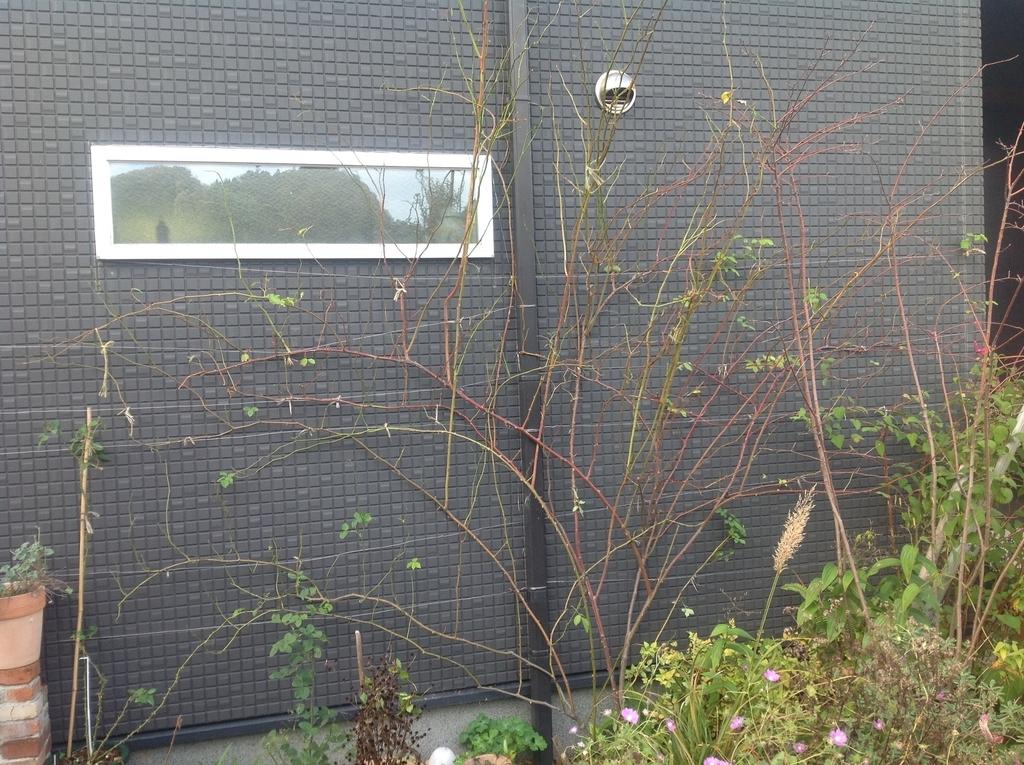f:id:m-garden-life:20181213124313j:plain