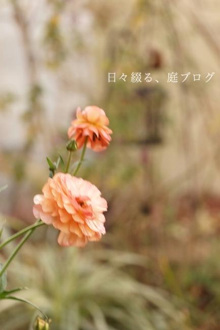 f:id:m-garden-life:20190121165435j:plain