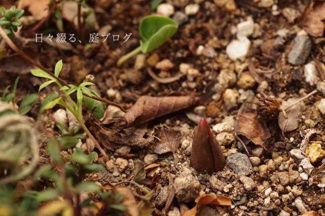 f:id:m-garden-life:20190121165915j:plain