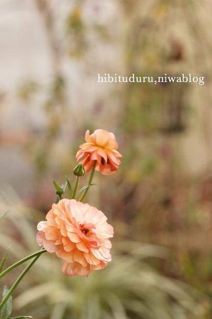 f:id:m-garden-life:20190121171033j:plain