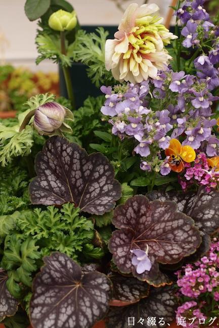 f:id:m-garden-life:20190211160914j:plain