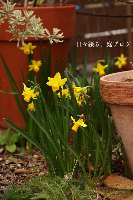 f:id:m-garden-life:20190310141401j:plain