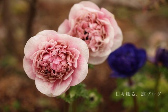 f:id:m-garden-life:20190310141509j:plain