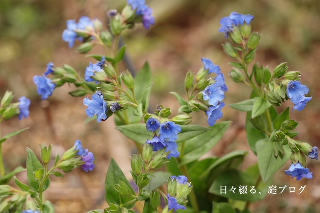 f:id:m-garden-life:20190310142053j:plain