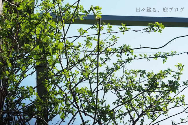 f:id:m-garden-life:20190315162719j:plain