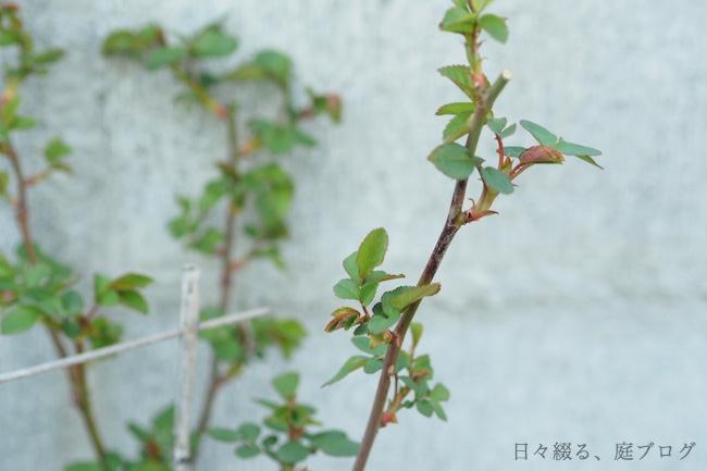 f:id:m-garden-life:20190315163539j:plain