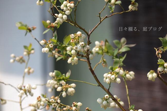 f:id:m-garden-life:20190407155258j:plain