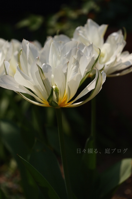 f:id:m-garden-life:20190407155939j:plain