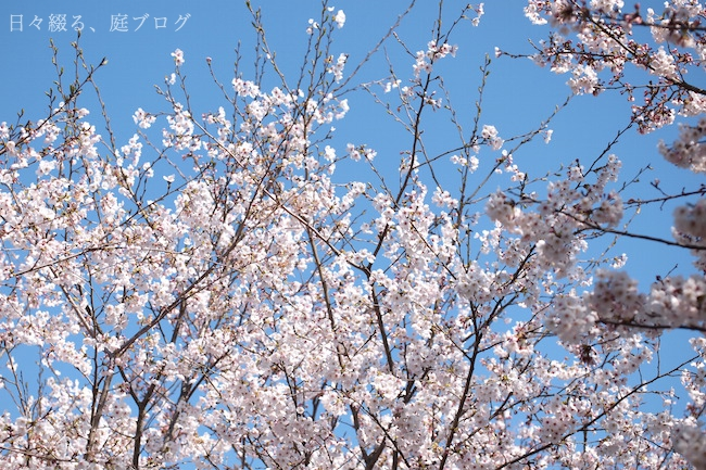 f:id:m-garden-life:20190407161140j:plain