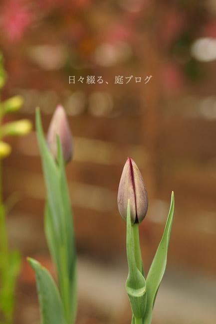 f:id:m-garden-life:20190409165024j:plain