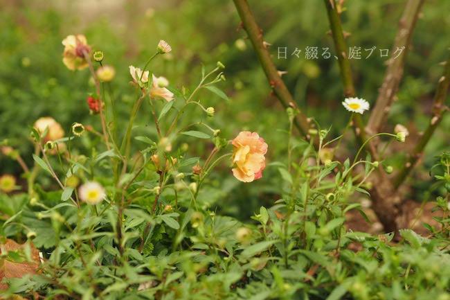 f:id:m-garden-life:20190409165222j:plain