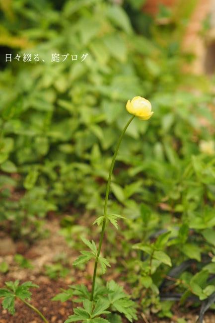 f:id:m-garden-life:20190409165713j:plain