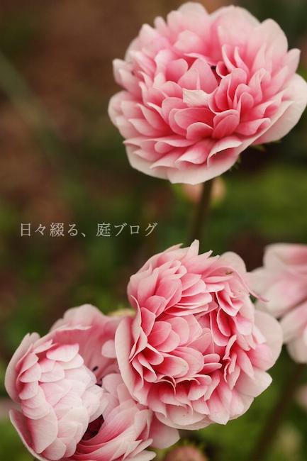 f:id:m-garden-life:20190411191751j:plain