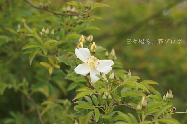 f:id:m-garden-life:20190411192109j:plain