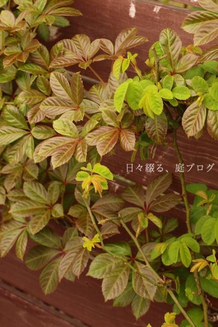f:id:m-garden-life:20190411193452j:plain