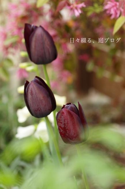 f:id:m-garden-life:20190417175944j:plain