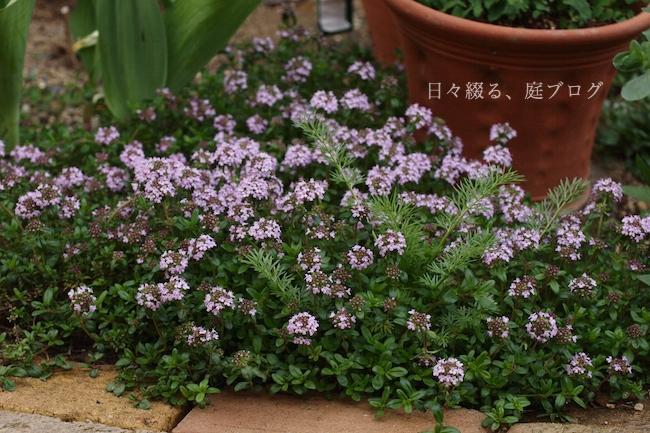 f:id:m-garden-life:20190417180548j:plain